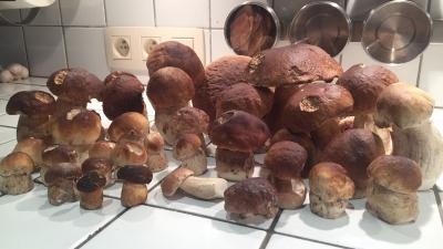 Eekhoorntjesbrood in Durbuy